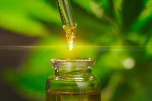 marijuana médicale et CBD le guide